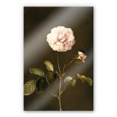 Acrylglasbild Dietzsch - Essig-Rose mit Hummel