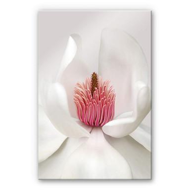 Acrylglasbild Haslam - Magnolie