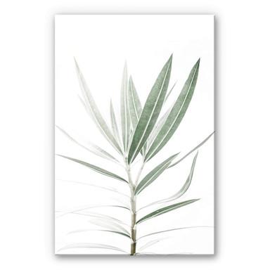 Acrylglasbild Sisi & Seb - Oleander