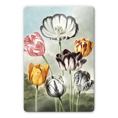 Glasbild Robert John Thornton - Tulpen