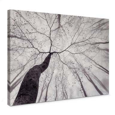 Leinwandbild Pavlasek - Ein Blick in die Baumkronen