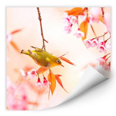 Wallprint Vogelgezwitscher in der Kirschblüte - quadratisch