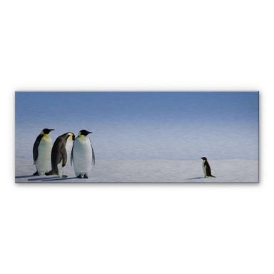 Alu Dibond Bild Penguin - Panorama