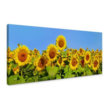 Leinwandbild Sonnenblumenfeld - Panorama
