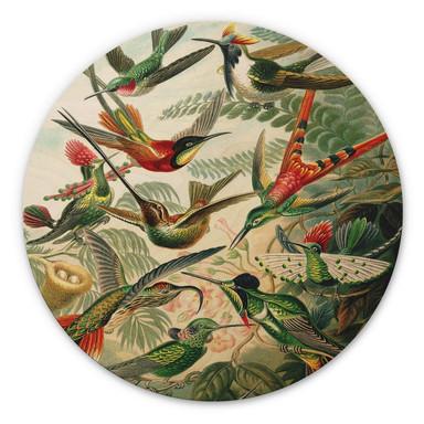 Holzbild Haeckel - Kolibris - Rund