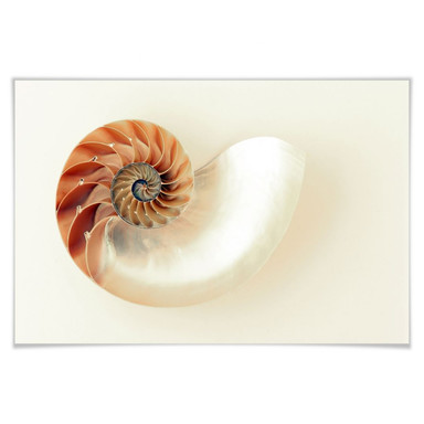 Poster Nautilus