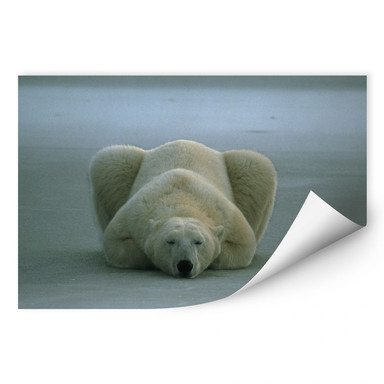 Wallprint NG Eisbär schlafend