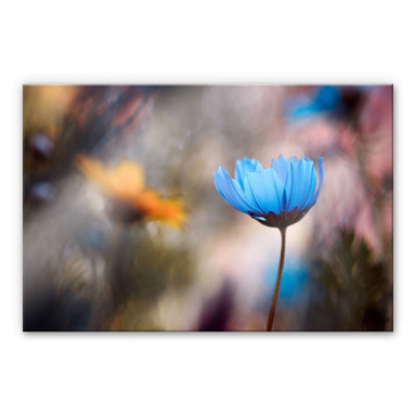 Acrylglasbild Bravin - Tanzende Blumen