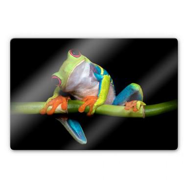 Glasbild Valverde - Green Frog
