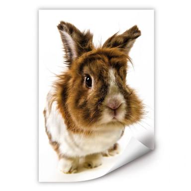 Wallprint Rabbit