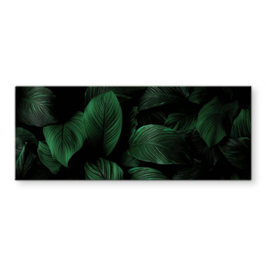 Glasbild Tropische Lilienblätter - Panorama