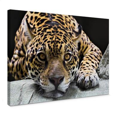 Leinwandbild Jaguar