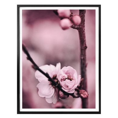 Poster Blütenknospen