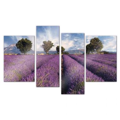Acrylglasbild Lavendelfeld (4-teilig)