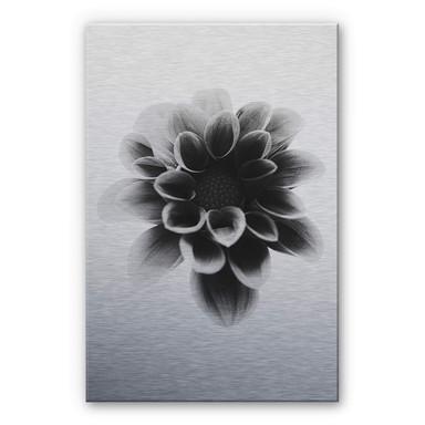 Alu-Dibond-Silbereffekt Grønkjær - Dahlia