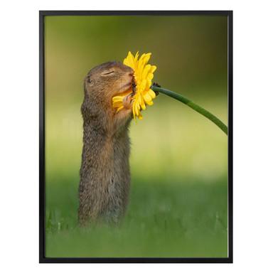 Poster van Duijn - Erdhörnchen riecht an Blume (Hochformat)