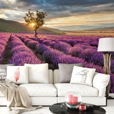 Fototapete Lavendelblüte in der Provence