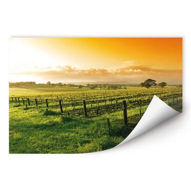 Wallprint Wein im Sonnenuntergang