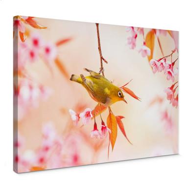 Leinwandbild Vogelgezwitscher in der Kirschblüte