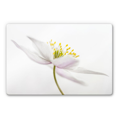 Glasbild Disher - Nemorosa