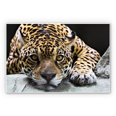 Hartschaumbild Jaguar