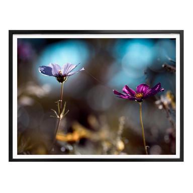 Poster Bravin - Blütenpaar