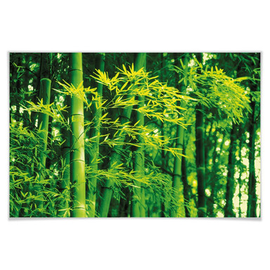 Giant Art® XXL-Poster Bamboo in Spring - 175x115cm