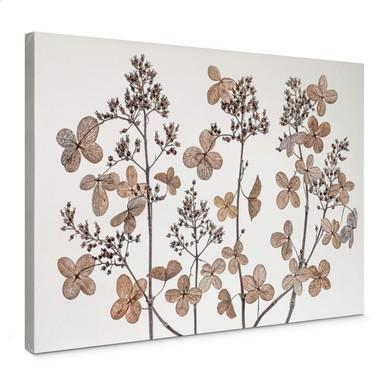 Leinwandbild Disher - Getrocknete Blumen
