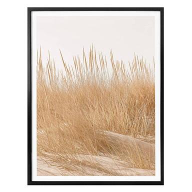 Poster Dünengräser