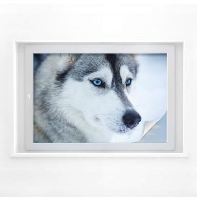 Sichtschutzfolie Eisblaue Augen