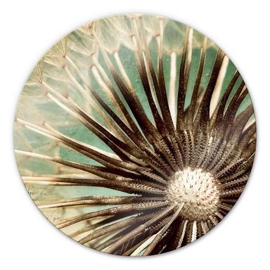 Glasbild Pusteblumen-Poesie - rund