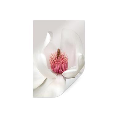 Premiumposter Haslam - Magnolie