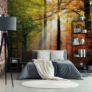 Fototapete Goldener Herbst Wald