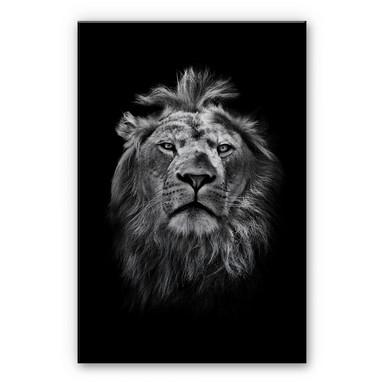 Alu-Dibond-Silbereffekt Lion