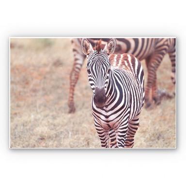 Hartschaumbild Zebra Fohlen