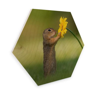 Hexagon - Holz Birke-Furnier van Duijn - Erdhörnchen hält Blume