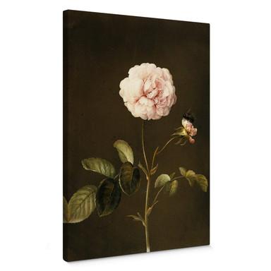 Leinwandbild Dietzsch - Essig-Rose mit Hummel