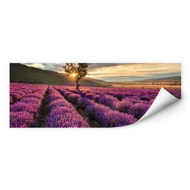 Wallprint Lavendelblüte in der Provence - Panorama 01