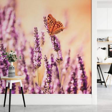 Fototapete Colombo - Der Schmetterling im Lavendel - 384x260cm