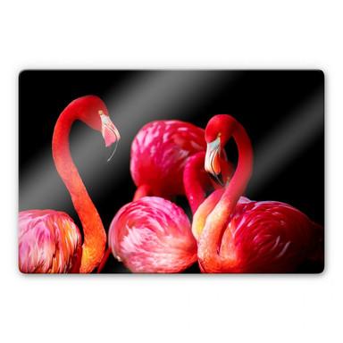 Glasbild Pink Flamingo