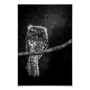 Poster Wilianto - Staring Owl