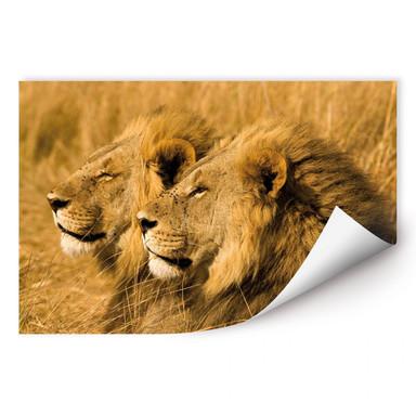 Wallprint NG Löwen Paar