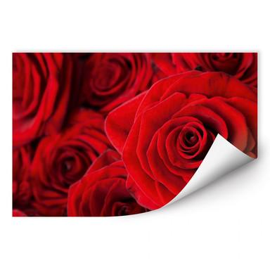 Wallprint Rose