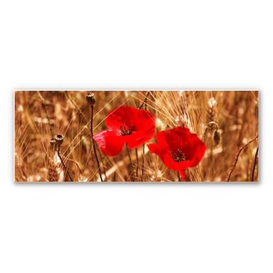 Wandbild Mohnblüten im Feld - Panorama