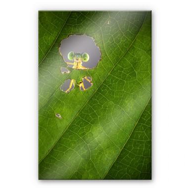 Acrylglasbild Wilianto - Hello little Friend