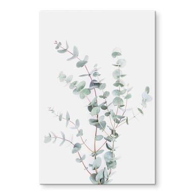 Acrylglasbild Sisi & Seb - Eukalyptuszweig