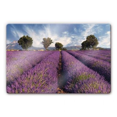 Glasbild Lavendelfeld