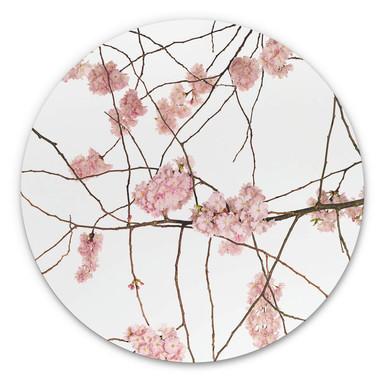 Alu-Dibond Kadam - Flora Japanische Kirschblüte - Rund