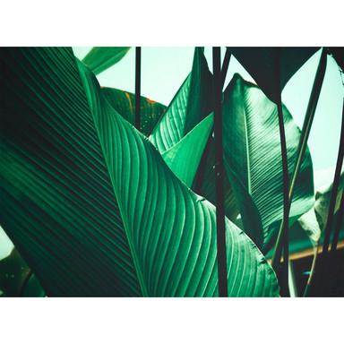Livingwalls Fototapete Designwalls Leaf Stalks Natur