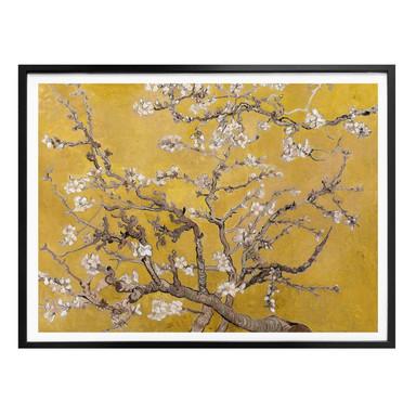 Poster van Gogh - Mandelblüte Ocker